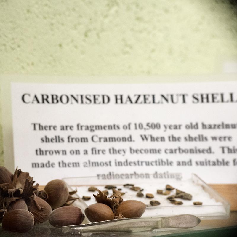 MaltingsExhibition Hazelnut shells